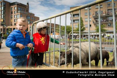 schapen - Oudenhofmarkt 2014