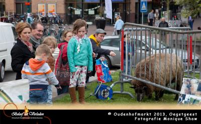 Oudenhofmarkt - schapen scheren